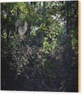 Charlotte's Web Wood Print