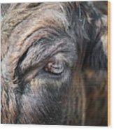Charming Eye Wood Print