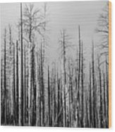 Charred Trees Wood Print