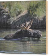 Chasing Tail Wood Print