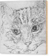 Chat Somnolant Resting Cat Wood Print