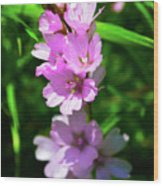 Checkerbloom Wood Print