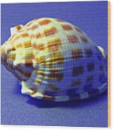 Checkered Helmet Seashell Wood Print