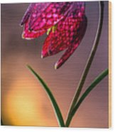 Checkered Lily Wood Print