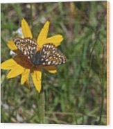 Checkerspot On Bahai Aster 1 Wood Print