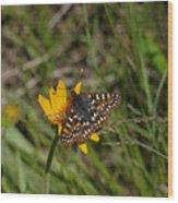 Checkerspot On Bahai Aster 4 Wood Print