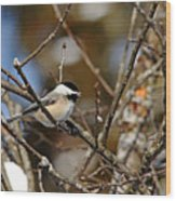 Cheeky Chickadee Wood Print