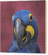 Cheeky Macaw Wood Print