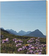 Cheerful Alpine Daisy Meadows Wood Print