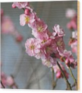 Cheerful Cherry Blossoms Wood Print