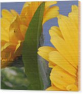 Cheerful Gerbera Daisies Wood Print