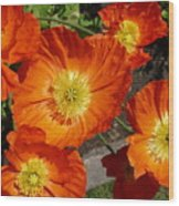 Cheerful Orange Flowers  Wood Print