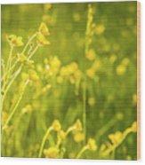 Cheery Buttercups Wood Print