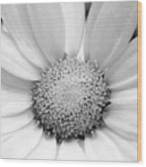 Cheery Daisy - Black And White Wood Print