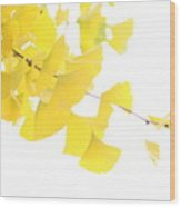 Cheery Ginkgo  Wood Print