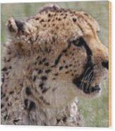 Cheetah No. 2  Wood Print