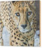 Cheeta Up Close Wood Print