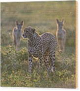 Cheetah Acinonyx Jubatus And Jackals Wood Print