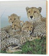 Cheetah And Her Cubs Wood Print