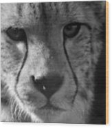Cheetah Black And White Wood Print