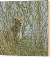 Cheetah Cub In Grass Wood Print