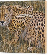 Cheetah In The Grass Wood Print