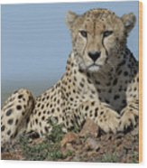 Cheetah On Mound Wood Print