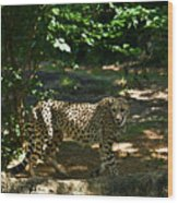 Cheetah On The In The Forest 2 Wood Print