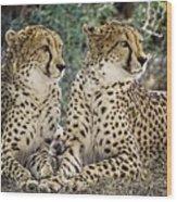 Cheetah Pair Wood Print