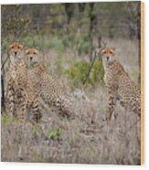 Cheetah Party I Wood Print