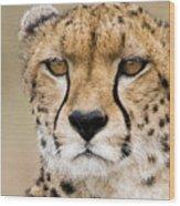 Cheetah Portait Wood Print