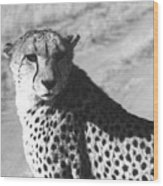 Cheetah Pose Wood Print