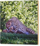 Cheetahs In Love Wood Print