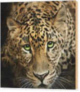 Cheetaro Wood Print by Big Cat Rescue