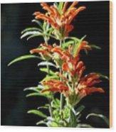 Cheeto Plant Portrait Wood Print
