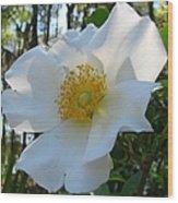 Cherokee Rose 1 Wood Print