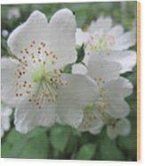 Cherokee Rose At The Farm Wood Print