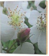Cherokee Rose Dover Nh  Wood Print
