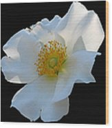 Cherokee Rose On Black Wood Print