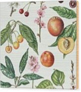 Cherries And Other Fruit-bearing Trees  Wood Print