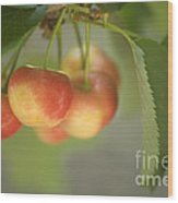 Cherries Hanging On A Branch Wood Print