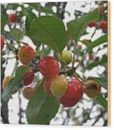 Cherries In The Morning Rain Wood Print