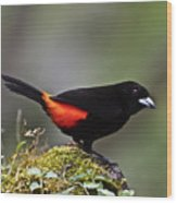 Cherrie's Tanager Wood Print by Heiko Koehrer-Wagner