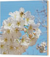 Cherry Blossom And A Bee Wood Print