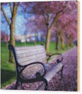 Cherry Blossom Bench Wood Print