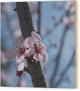 Cherry Blossom Branch Wood Print