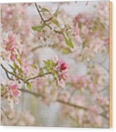 Cherry Blossom Delight Wood Print