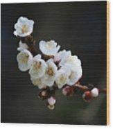 Apricot Blossom I Wood Print