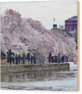 Cherry Blossom In Washington D C Wood Print