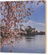 Cherry Blossom Over Tidal Basin Wood Print